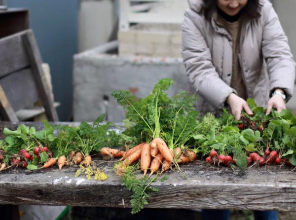 [参加者募集]3ヶ月限定!秋野菜の体験コース